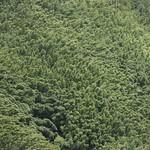 Rain forest Maui, off Road to Hana