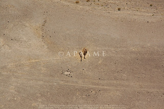 Camel | by APAAME