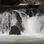 Fish swimming up a waterfall