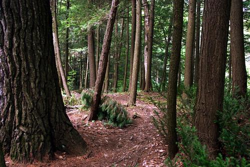 nature paysage lieux montebello comtépapineau