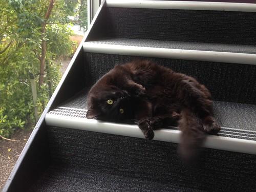 Cat visitor.