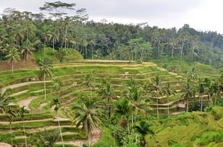 Bali.Rizières en terrasses.03 | by Antoine 49