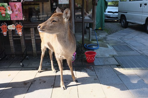 The Deer of Nara | by MatthewW
