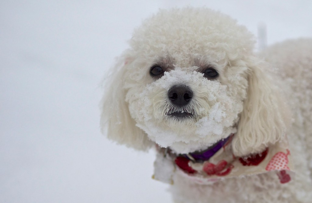 Mindy in the Snow | This work is licensed under a Creative C