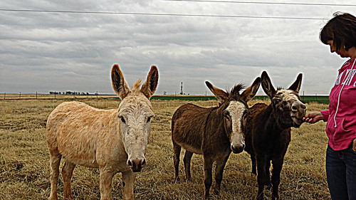 Donkeys and Drilling Rigs edit