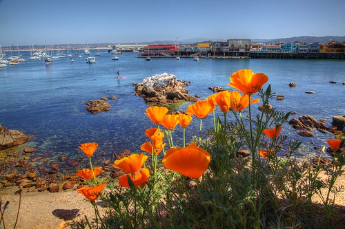 California Poppies and Fisherman's Wharf | by Princess Stand in the Rain