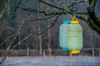 Lanterns in Winter