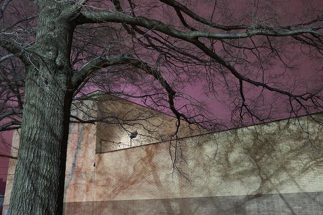 tree:wall