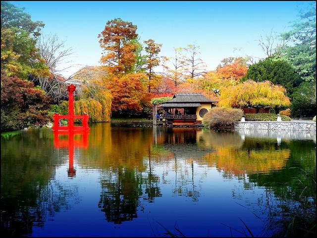 Japanese Garden. Pond