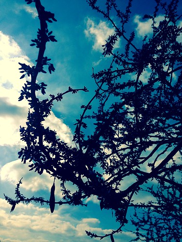 austin backlit bark blue bluesky branch branches closeup clouds cloudy craggy dark day daylight fingers flowers gnarled laurels leaves navy outdoors outside park parks scene scenery scenic shade shadow silhouette sky skyline skyward study sunlight texas texture tree trees vegetation view wood woodedarea woods iphone iphoneography cameraphone iphone5 iphonefive