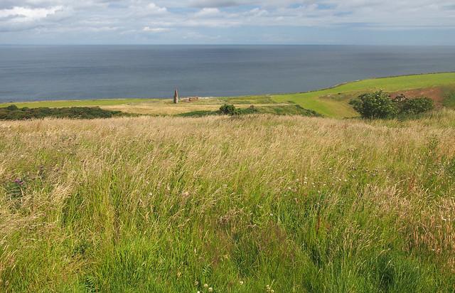 The Berwickshire coast path near Old Cambus West Mains