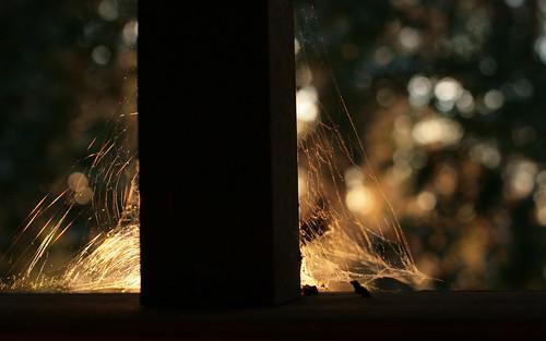 sunset florida spiderweb deck tallahassee canonef35mmf14lusm