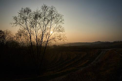 alberi trees sole sun savorgnanodeltorre povoletto