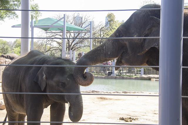 Houston Zoo_93