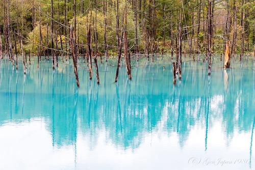2016 北海道 旅行 美瑛町 青い池 風景 日本 japan hokkaido travel nikond610 landscape