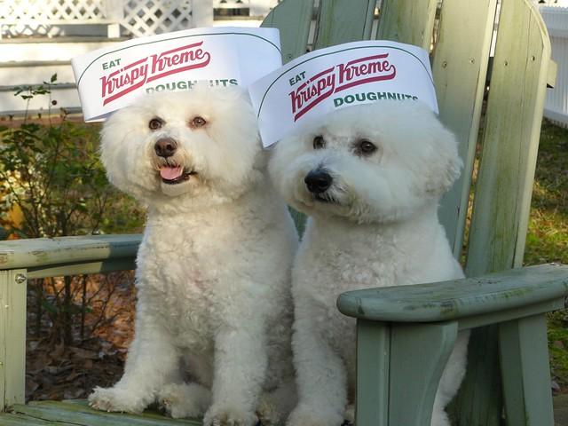 Krispy Kreme Doughnuts...Yum!