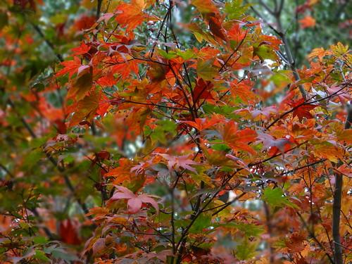 Fall Foliage   by Martin Ibert