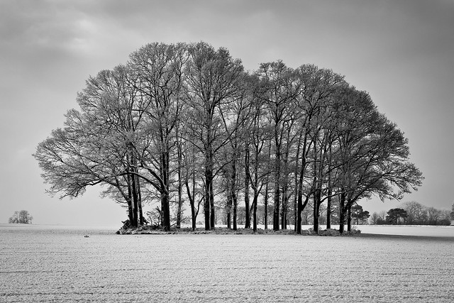 Winter Copse.