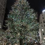 The tree at night