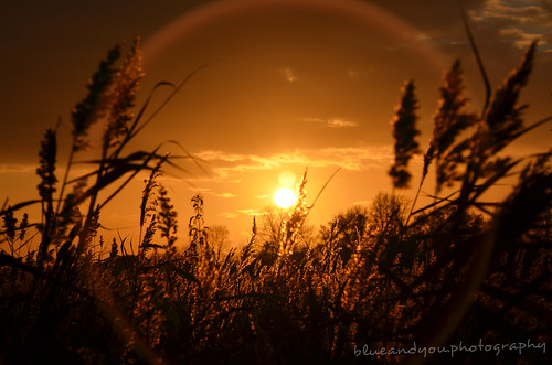 sunset in the reed | by blueandyou.photography