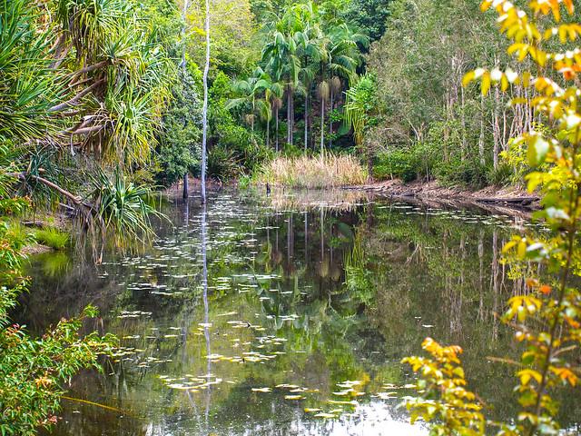 Artificial lagoon - Australian Plant Communities