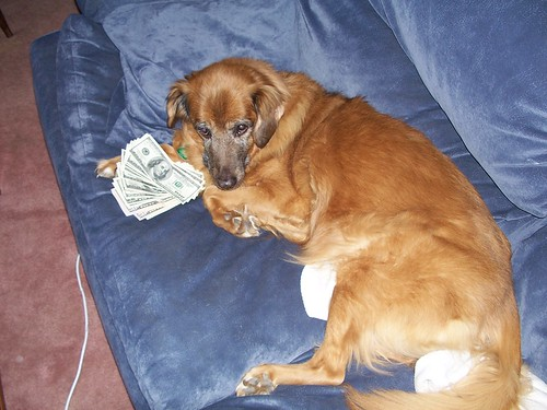 Dog Vices: Greed | by yomanimus