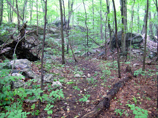 Connecticut Woods
