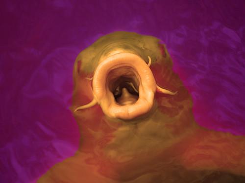 fishdevil | by Scientific deliriums
