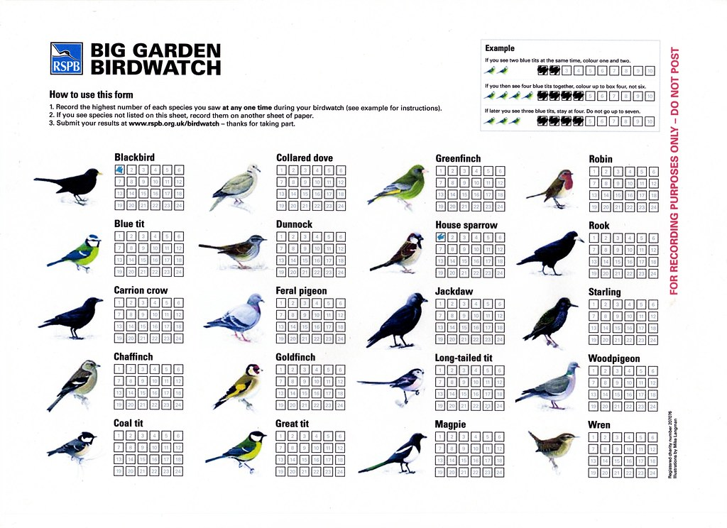 Birdwatch Results Sheet