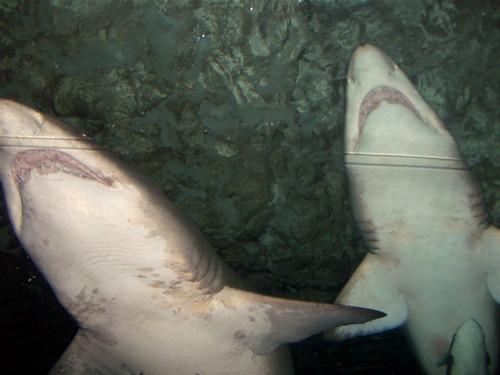 Sydney Aquarium 047   by jennifrog