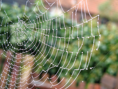 Spider's web | by scoobygirl
