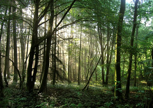 Forest in Burgundy | by tinken
