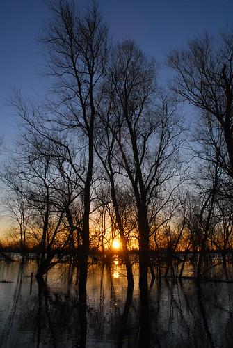 trees silhouette sunrise reflections welney welneywashes
