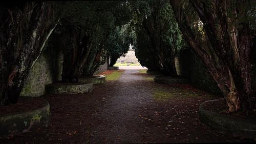 trees ireland church dark path cogalway yew avenue tuam canoneos600d