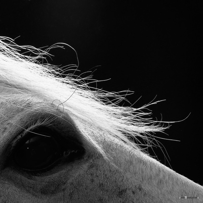 horse_A.P (2)