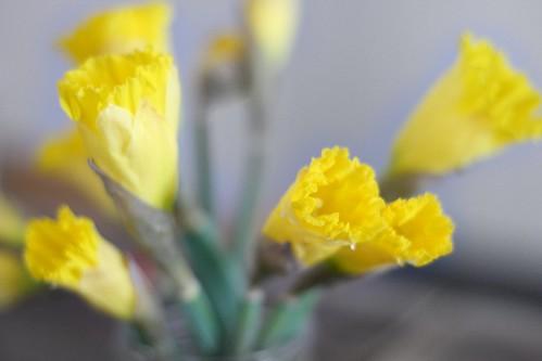Daffodils | by Virtualdistortion