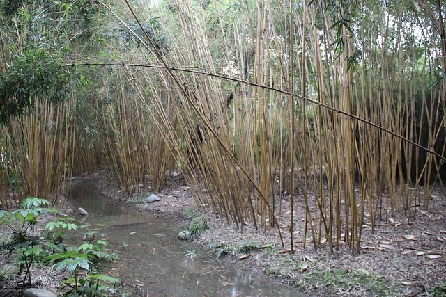 Jinsha Site Park