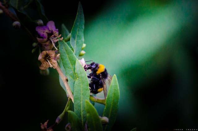 Honey Beeeeeee