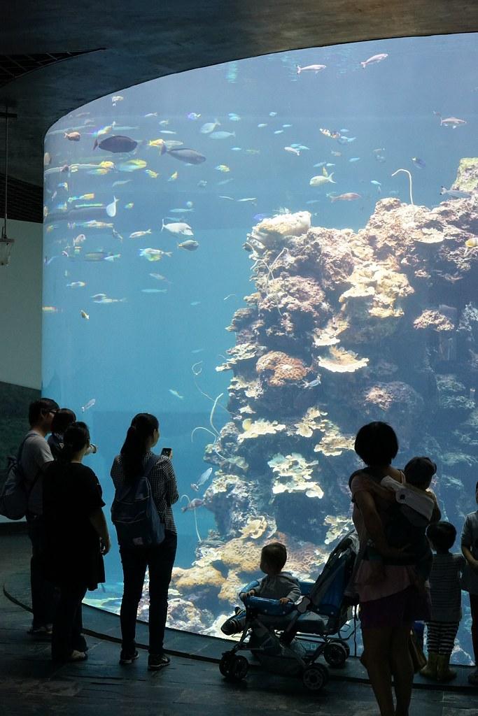 国立海洋生物博物館_43