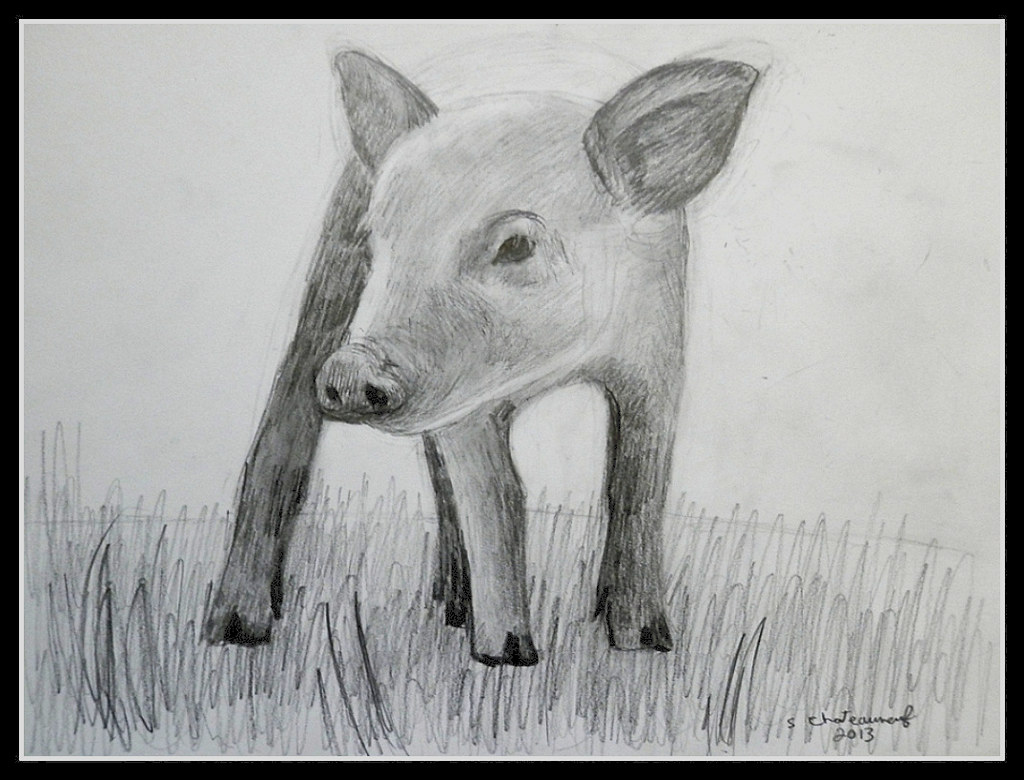 A pig on a grassy hill pencil drawing by steven chateaun flickr