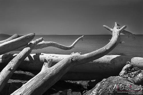 Legno sul mare