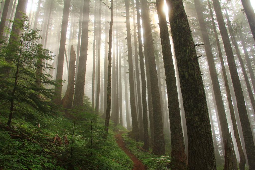 Sun through Trees - by BLMOregon Sun through Trees - by BLMOregon