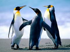 Mon, 2008-02-18 05:07 - Penguins