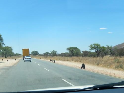 Tussen Windhoek en Weavers Rock - bavianen