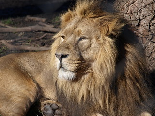 Chester Zoo | by Nigel Swales - 2