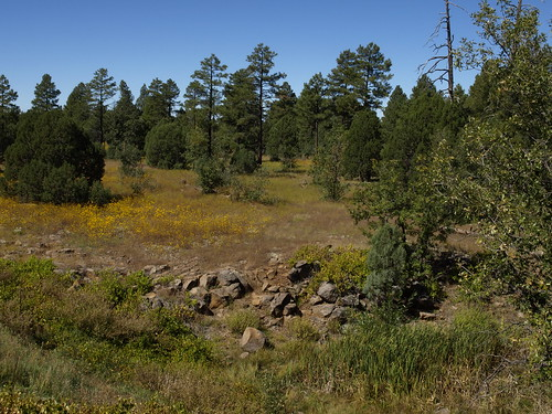 walnutcreek woodlandlake woodlandlakepark creeks lakes nature pinetop pinetoparizona pinetoplakeside arizona geo:lat=34127291556306155 geo:lon=1099529381096363 geotagged riparian riparianzone riparianarea riparianhabitat