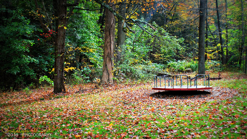 park autumn trees light fall grass leaves forest landscape fun woods colorful pennsylvania pa rays pennsville merygoround carolynlandi