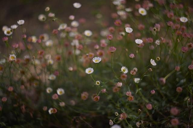 flower, no name