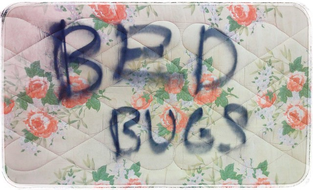 Bed Bug Bed