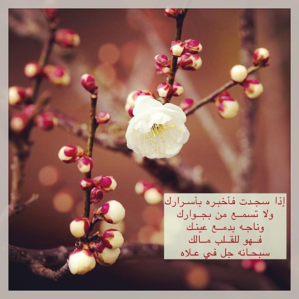 #صلاة_الوتر #احبتي فهي جنة القلب و الدنيا بارك الله في اوق ...